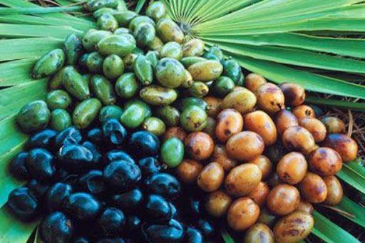 鋸棕櫚功效1. 治療及預防前列腺疾病